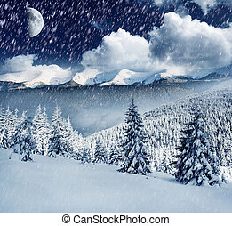 Winter - Beautiful winter landscape with snow covered trees.