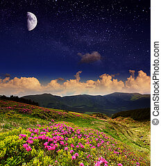 flower - Magic pink rhododendron flowers under moon radiance