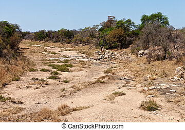 Rocky dry riverbed with trees and bushes - Rocky dry...