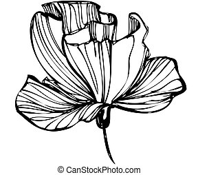 sketch of flower buds on a white background - a sketch of...