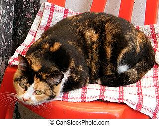Or Yehuda Cat 2010