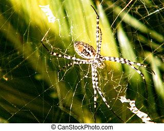 Or Yehuda Spider 2010