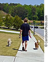 Boy Walking Dogs - A preteen aged boy walking 2 dogs on a...