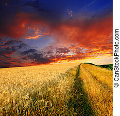wheat field - majestic sunset in a wheat field