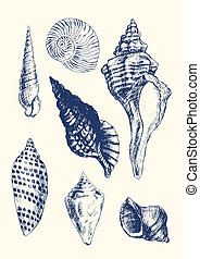 7 various seashells - Collection of 7 hand- drawn seashells