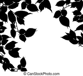 Black white leaves isolated on a white background....