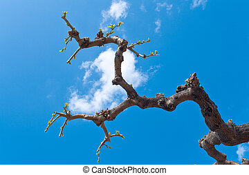 Dry tree branches over blue sky