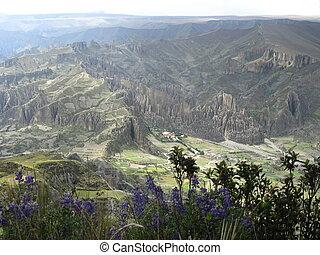 Mountain Lupine and Las Animas - Mountain Lupine, here seen...