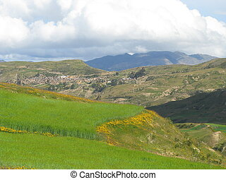 Barley in the Andes - The word Andes comes from the Spanish...