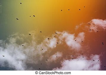 repülés, madarak
