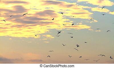 Seagulls - Water birds