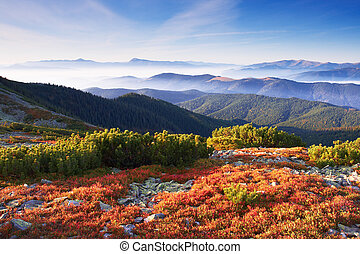 mountain autumn - Colorful autumn view of landscape...