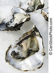 Seafood - Oysters - Open fresh oysters on ice in a seafood...