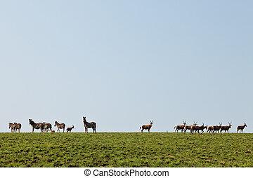 Gehen,  wildebeest,  Zebras, Hügel