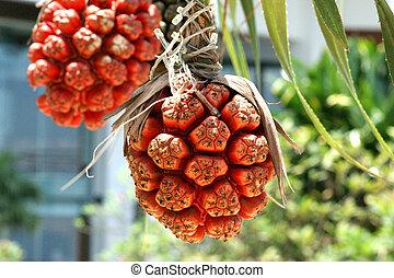 Screw Pine - Pandanus tectorius, or Hala, seashore plants....
