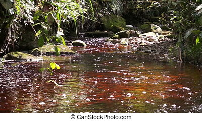 Tannin Stained Creek Running Red in - A tannin stained, red...