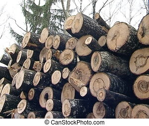 timber industry logs