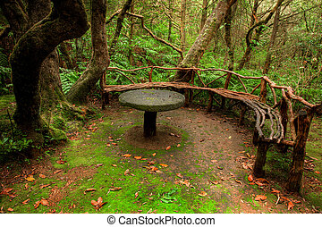 Table and bench deep in the forest