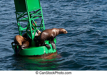 Stellar Sea Lions - A photo of several Stellar Sea Lions...