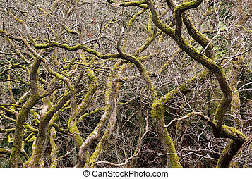 Gnarled branches of many trees - Close up shot of interwoven...