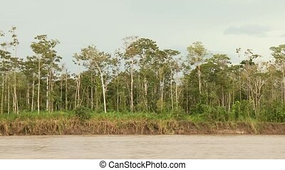 Shipping On Amazon River