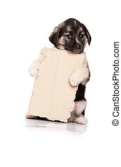 Puppy with paper - Cute puppy of 1,5 months old with a...