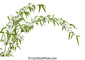 Bamboo leaves - Twig leaves of bamboo tree in spring