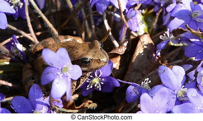 spring frog jump and flowers
