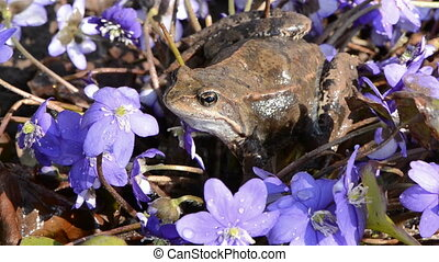 violet flowers and frog