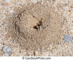 Sand anthill, active nest with ants
