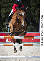 Show Jumping - A show jumping horse and rider jumping a...