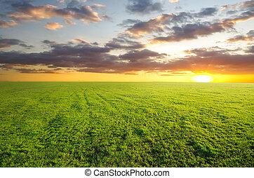 dirt road - green grass