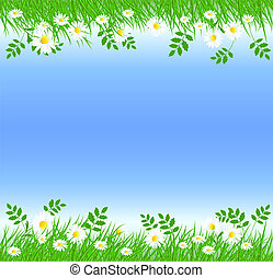Camomiles with green grass