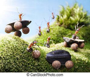 car crash at ants races, ant tales