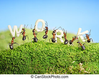 team of ants constructing word work, teamwork