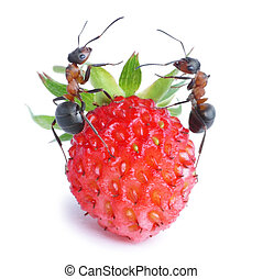 ants and strawberry - two ants and strawberry