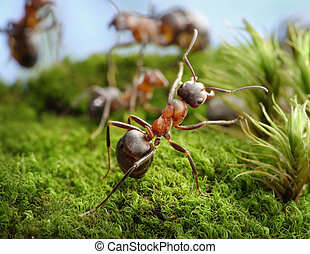 Stop! Deed of Hero, ant tales