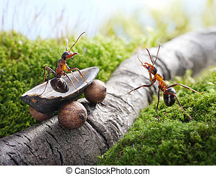 lift, handsome! hitchhiking , ant tales - lift, handsome!...
