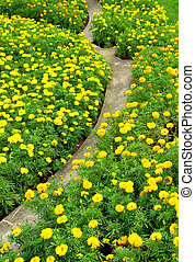 pathway with gardening blooms - pathway with gardening...