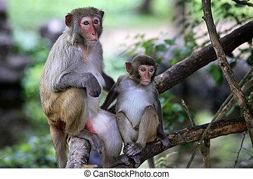Family of monkeys. Island Hainan, China