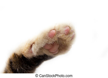 cats paw on a white background