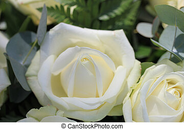 Single white rose - Close up of a single white rose in a...