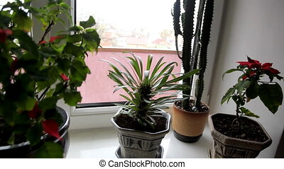 cactus on the window