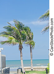 Couple coconut tree with blue sky and beach
