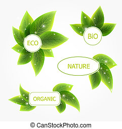 Abstract vector natural banners with leafs - Abstract vector...