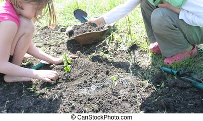 children watering and planting - children watering digging...