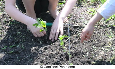 planting kids people - children putting plants in the ground...