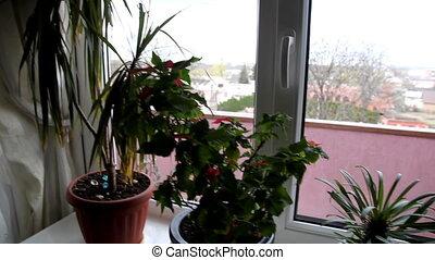 cactus on the window