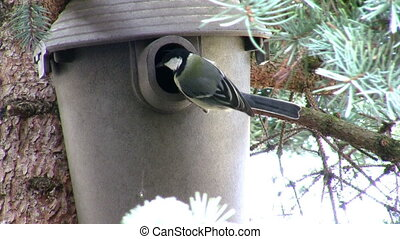 Nestbox - Bird flying into a nestbox