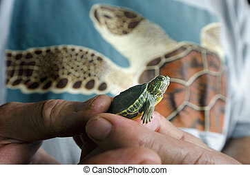 Wildlif and Animals -Sea Turtle - Close up off a baby marine...